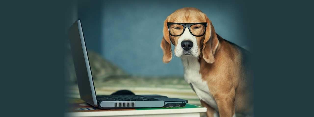 Dog updating an online catalog