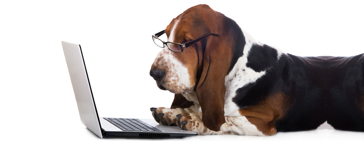 web marketing for veterinary clinics