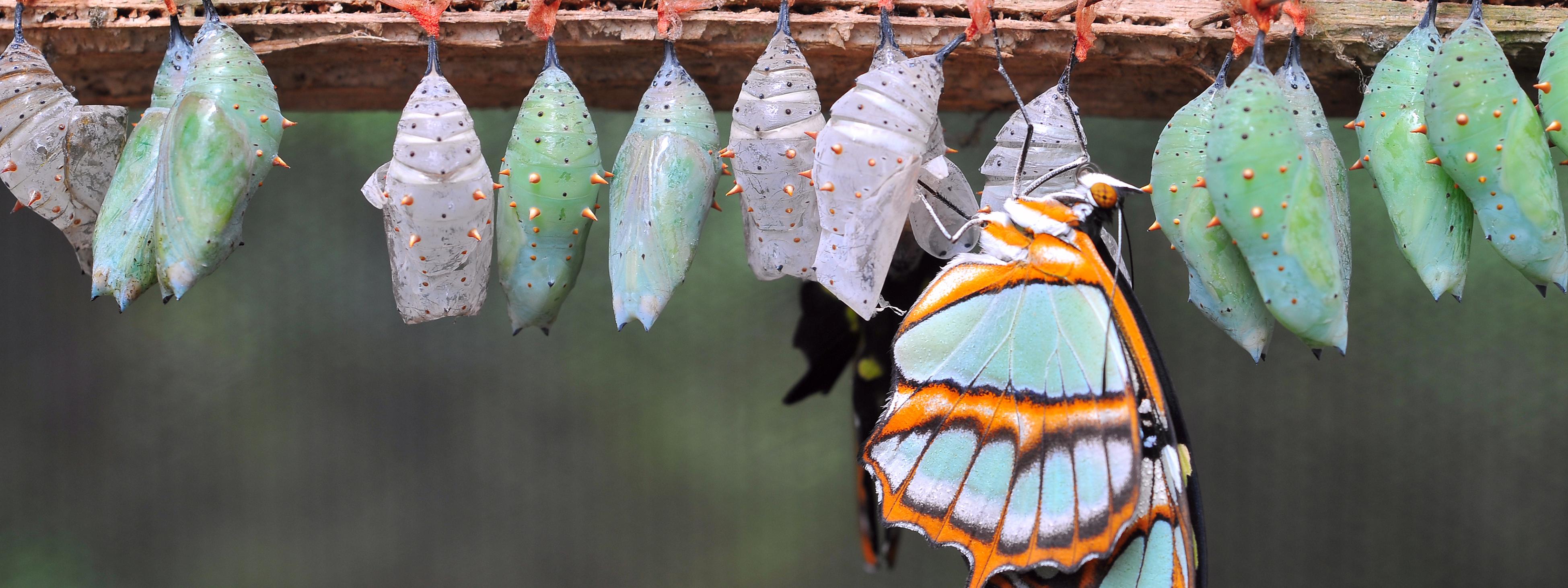 unique butterfly